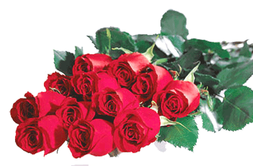 one-dozen-red-roses-for-top-of-coffin-at-funeral-service